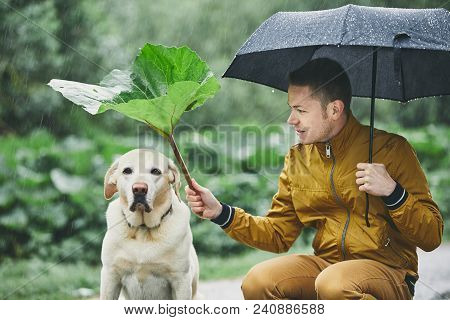 Rainy Day With Dog In Nature. Young Man With Umbrella Holding Leaf Of Burdock Above His Sad Labrador
