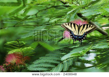 Butterfly, Trees And Nature