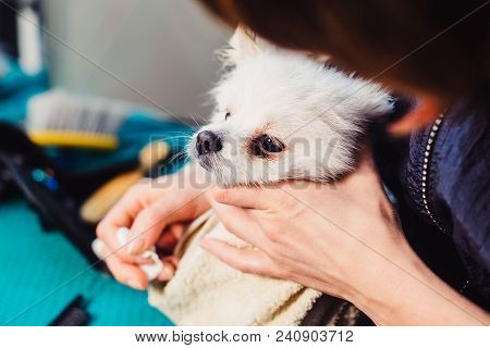 Portrait Of A Wet Dog. Pomeranian Dog In The Bathroom In The Beauty Salon For Dogs. The Concept Of P