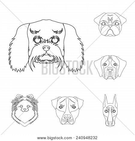 Dog Breeds Outline Icons In Set Collection For Design.muzzle Of A Dog Vector Symbol Stock  Illustrat