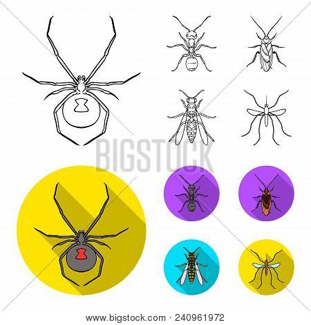 Spider, Ant, Wasp, Bee .insects Set Collection Icons In Outline, Flat Style Vector Symbol Stock Illu