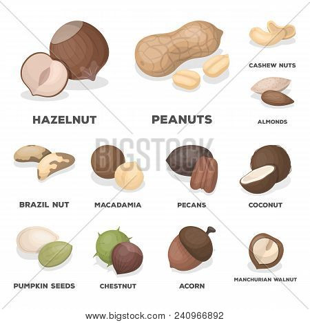 Different Kinds Of Nuts Cartoon Icons In Set Collection For Design.nut Food Vector Symbol Stock  Ill