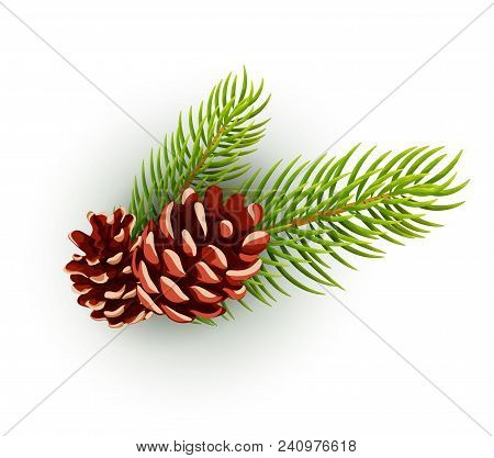 Pine Cone, Spruce Fir Tree Branch With Leaves. Hand Drawn Christmas, Winter And New Year Holiday Dec