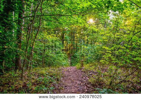 A Beautiful Landscape Of A Dirt Trail In A Lush Forest With The Sun Breaking Through The Trees.