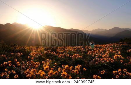 Person Surrounded By Flowers. Woman Meditating On Arnica Meadow At Sunset. Outdoor Yoga In Washingto