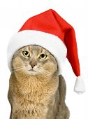 Abissinian cat in Santa Claus hat isolated on white poster