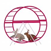 Grey and brown rabbits in the violet running wheel for hamsters poster