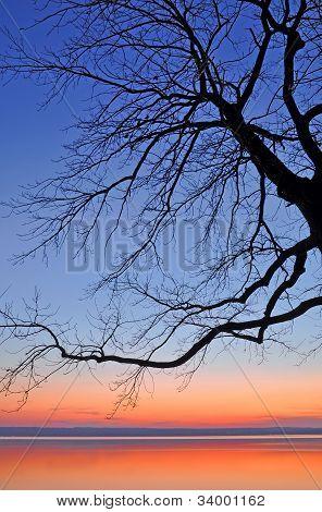 Baum bei Sonnenuntergang