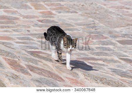 Big Gray And White Cat Walks On The Roof Of The Muslim Part Of The Grave Of The Prophet Samuel On Mo