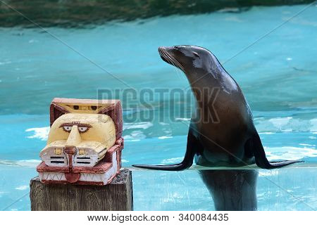 Portrait Of A Sea Lion (zalophus Californianus) Leaning On The Edge Of A Water Tank