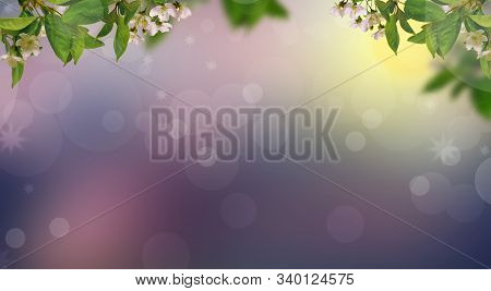 Blooming Branch Of Cherry Tree Spring Border Background. Light Background. Colorful Background. Spri
