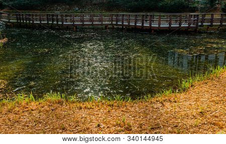 Sunlight Glimmering Off Water In Small Pond With Elevated Wooden Walkway In Background.