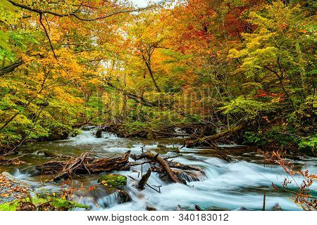View Of Oirase River Flow Through The Forest Of Colorful Autumn Foliage And Green Mossy Rocks At Oir