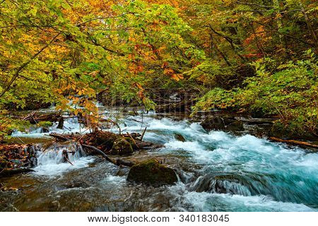 View Of Oirase Mountain Stream Flow Over Rocks In The Colorful Foliage Of Autumn Season Forest At Oi
