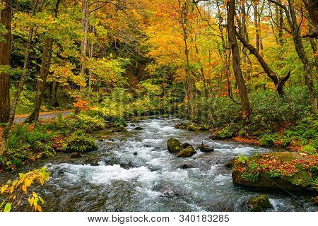 Oirase Mountain Stream Flow Along The Oirase Stream Walking Trail In The Colorful Foliage Of Autumn