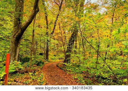 View Of Oirase Stream Walking Trail In The Colorful Foliage Of Autumn Forest At Oirase Gorge In Towa