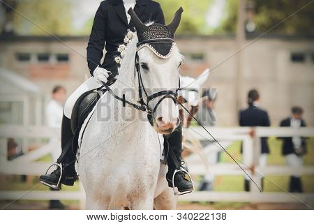 Portrait Of A Cute White Horse, Dressed In Equestrian Sports Gear, With A Rider In The Saddle, Perfo