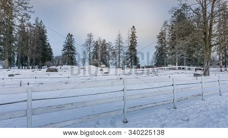 A Long White Fence Encloses A Horse Farm. Winter Cloudy Day.