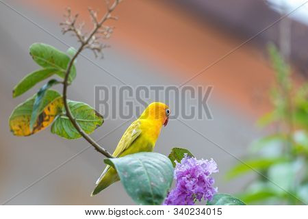 Bird (lovebird, Disambiguation) Lovebirds Are 13 To 17 Cm. Are Among The Smallest Parrots, That Are