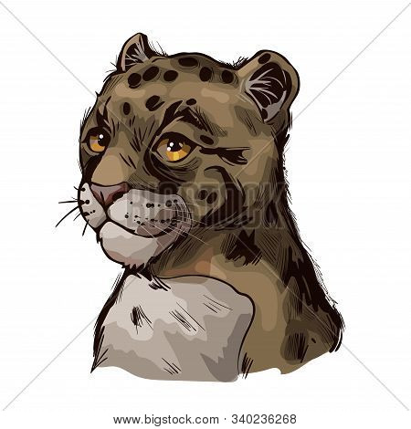 Clouded Leopard Baby Tabby Neofelis Nebulosa Wild Cat From Himalayan Isolated Sketch. Digital Art Il