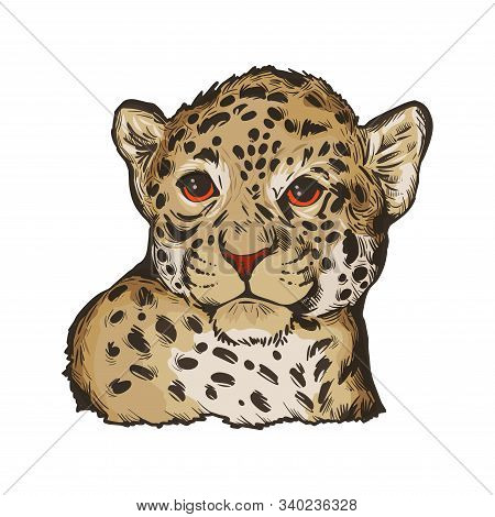 Jaguar Baby Tabby Portrait Closeup Of Animal Isolated Sketch. Panthera Carnivore Fauna. Wildlife Of