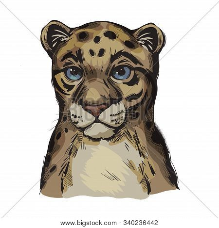 Sunda Clouded Leopard Baby Tabby Vector Portrait Closeup. Neofelis Diardi Animal From Feline Mammals