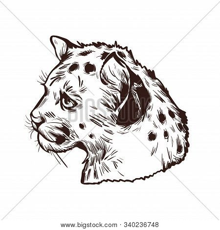 Cougar Baby Tabby, Large Felid Isoated Wildlife Cat Sketch T-shirt Print Monochrome Design. Vector I
