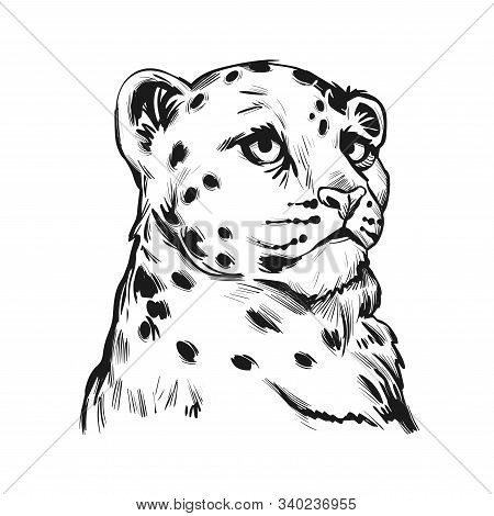 Snow Leopard Baby Tabby Portrait In Closeup Isolated Sketch T-shirt Print Monochrome. Vector Spotted