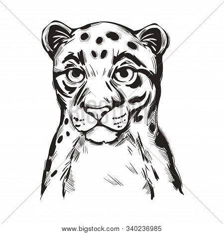 Sunda Clouded Leopard Baby Tabby Vector Portrait Closeup Isolated Sketch T-shirt Print, Monochrome.