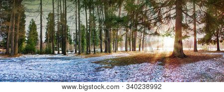 Spring Landscape The Setting Sun The Spring The Forest Comes The Snow Melts And The Soil Trees Spruc