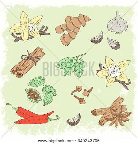 Hand Drawn Spice Set With Vanilla, Cinnamon, Anise, Cardamom, Garlic, Ginger, Pepper.