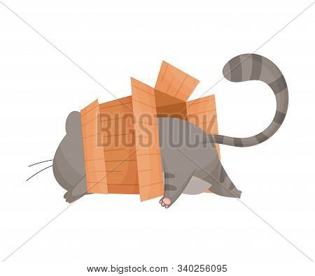 Cat Trying To Get Into Cardboard Box And Stuck In It Vector Illustration