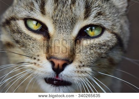 Cat With Green Eyes And Interesting Look, Cat Portrait, Cat Close-up Portrait, Sad Cat, Adorable Cat