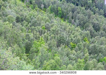 Boreal Forest In Norway. Mixed Forest Of Arctic Norway In Nordland Region.