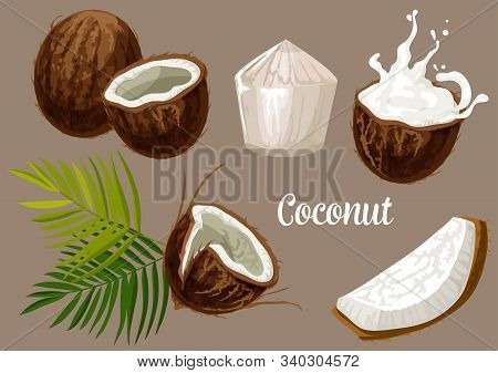 Coconut With Milk Splash, Vector Coco Nut Fruits With Palm Leaf. Whole And Cracked Coconut With Juic