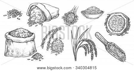 Wheat Grain And Ear Spikes, Vector Sketch Icons. Wheat, Rye, Barley Or Rice Grain In Scoops And Sack