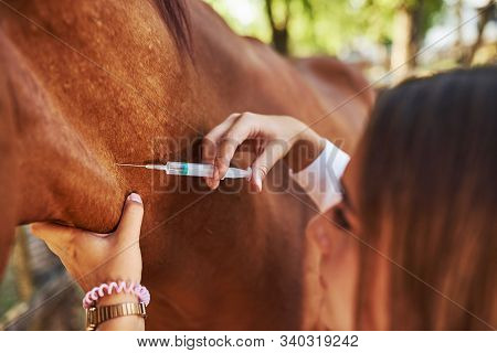 Make An Injection. Female Vet Examining Horse Outdoors At The Farm At Daytime.