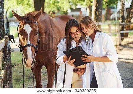 Reading Documents. Two Female Vets Examining Horse Outdoors At The Farm At Daytime.