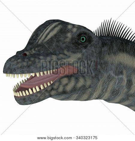 Sauroposeidon Dinosaur Head 3d Illustration - Sauroposeidon Was A Sauropod Herbivorous Dinosaur That