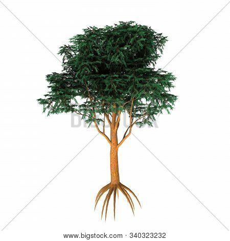 Tasmania Blue Gum Tree 3d Illustration - Eucalyptus Globulus Is Evergreen Broad Leaf Tree That Is Na