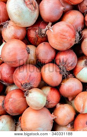 Group Of Dirty Golden Onions Fresh Gathered On Field At Ecological Farm, Summer Tray Market Full Of