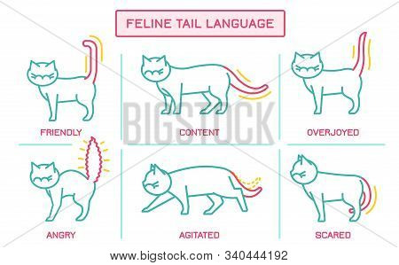 Cat Behavior Infographic. Domestic Animal Or Pet Tail Language. Kitty Reaction. Simple Icon, Symbol,