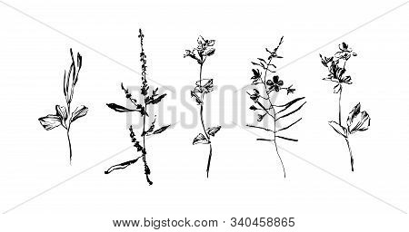 Set Of Hand Drawn Wild Plants. Outline Herbs With Leaves And Flowers, Ink Painting Silhouette. Black