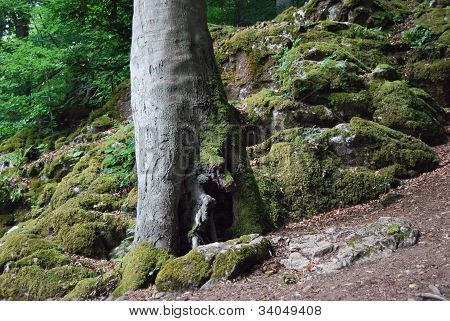 tree trunk in a forest in Hesse