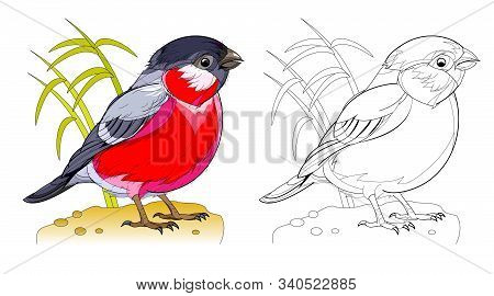Colorful And Black And White Page For Coloring Book For Kids. Fantasy Drawing Of Cute Little Bullfin