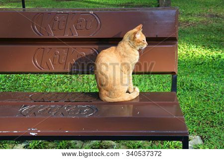 Manila, Philippines - November 28, 2017: Cat Sits On A Bench Advertising Kitkat Chocolate Bars In Ma