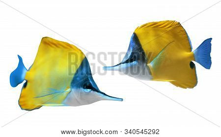 Collage Of Beautiful Yellow Longnose Butterfly Fish On White Background