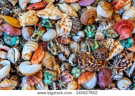 Beautiful Sea Assorted Colorful Shells Background Texture.