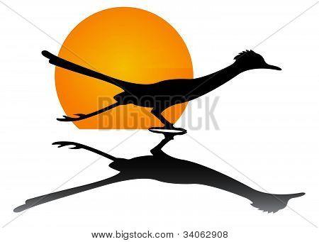 Roadrunner Sun