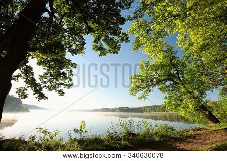 Oak trees lake water spring morning sun Nature background Nature landscape Nature branch twig lush Nature background Fresh tree sunrise Nature background Nature background green leaves foliage Nature background travel Nature background Nature background.
